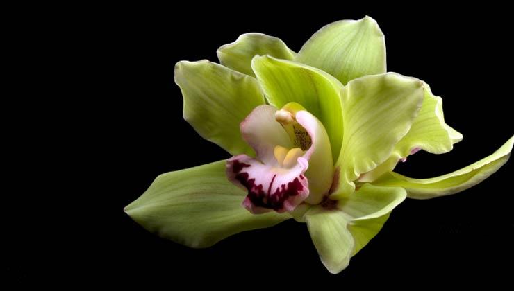 Orquídeas, 10 plantas que ayudan a limpiar el aire en su hogar