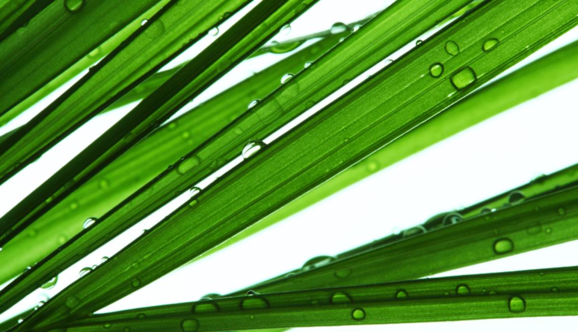 10 plantas que purifican el aire de tu hogar