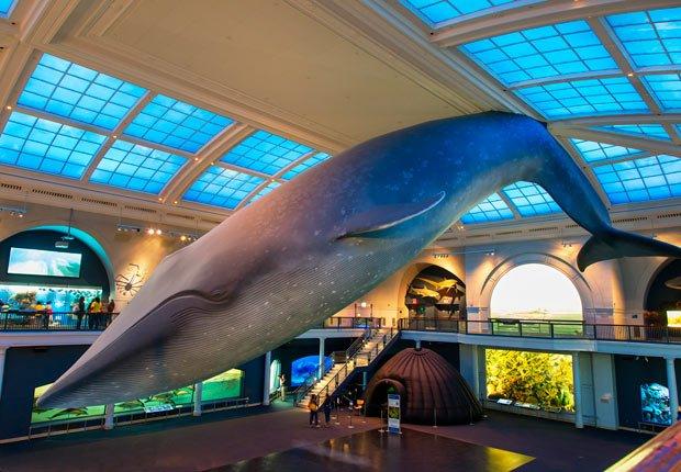 Museo Americano de Historia Natural - Museos más famosos del mundo
