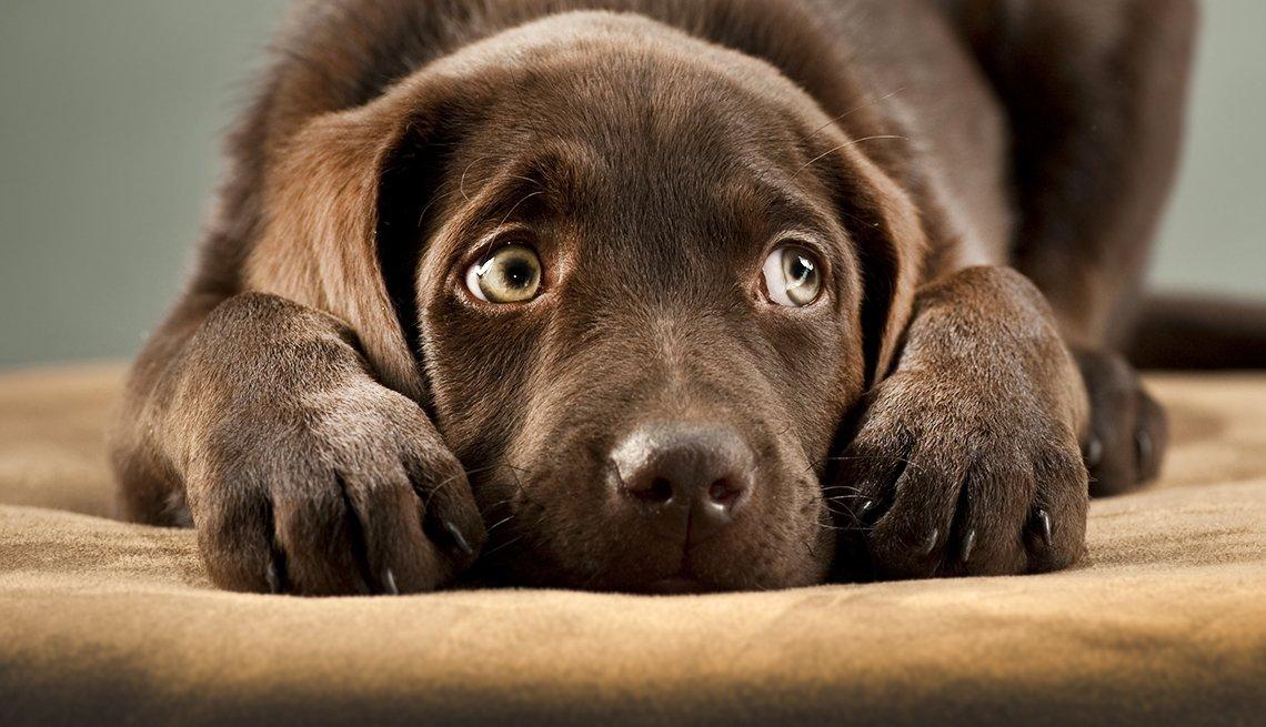 Sad dog covering it's ears