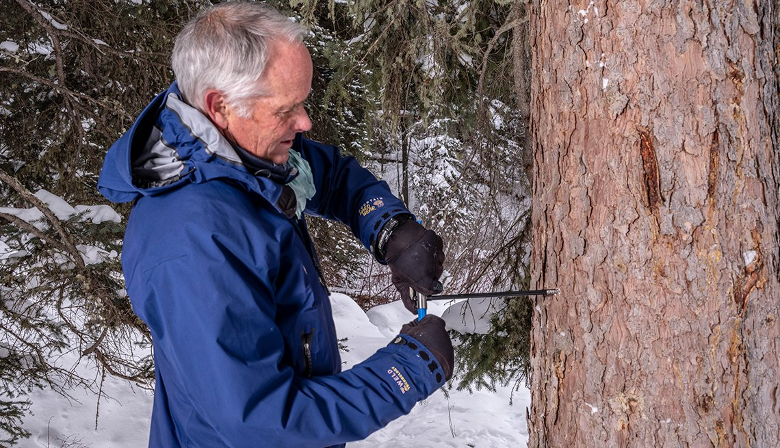 Page Dabney extracts a tree core using genetics to combat illegal timber