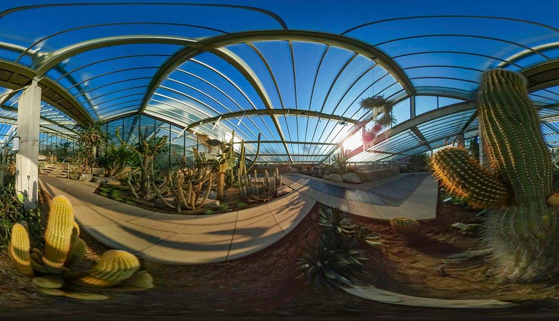 Vista de realidad virtual de un cactus y otras plantas