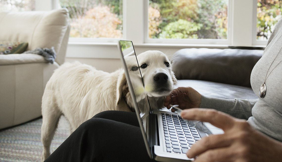 dog leans face on laptop computer screen while woman's hands are on keyboard