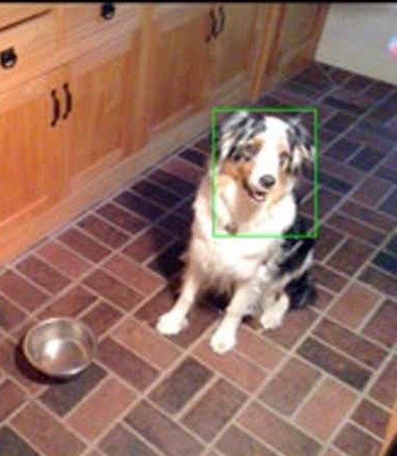 Imagen de una cámara wifi de un perro con un cuadro verde alrededor