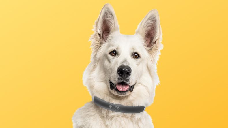 Perro con un collar electrónico