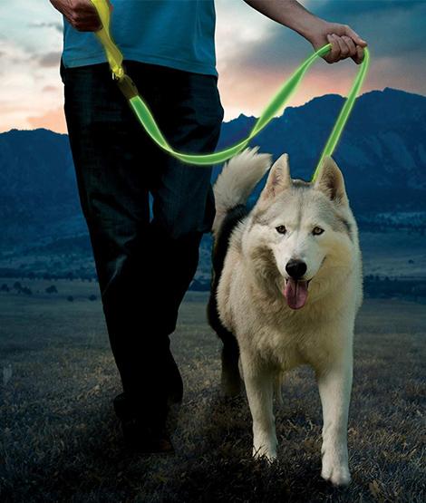 Una persona lleva a un perro con su collar
