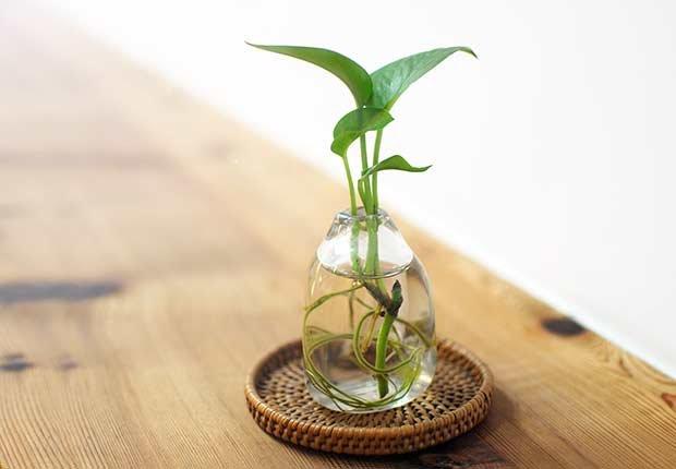 Plantas resistentes que requieren poco cuidado cristina mella aarp - Plantas de agua para interiores ...