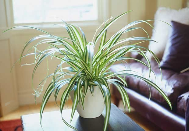 Plantas Resistentes Que Requieren Poco Cuidado Cristina