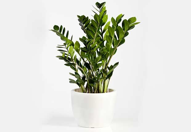 Plantas resistentes que requieren poco cuidado cristina for Plantas de terraza resistentes