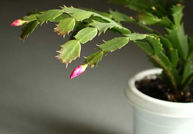 Plantas resistentes que requieren poco cuidado cristina for Cactus cuidados exterior