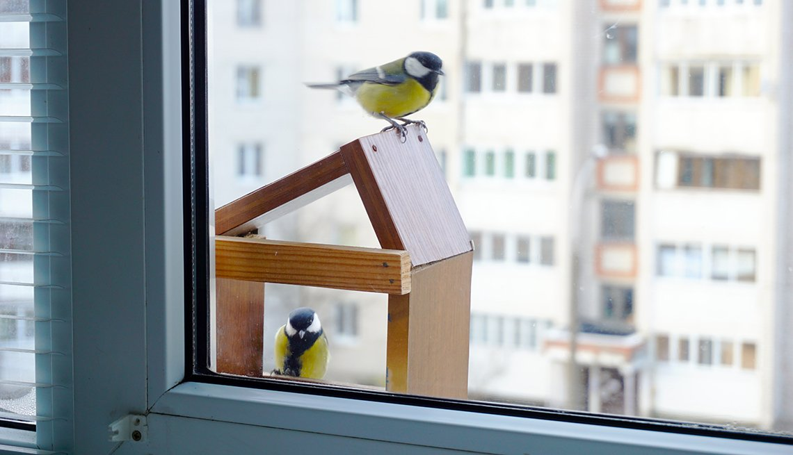 Two birds sit on a bird house outside a window of a highrise home.