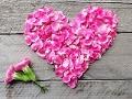Flores con significado para decorar en ocasiones especiales - Pétalos de clavel en forma de corazón