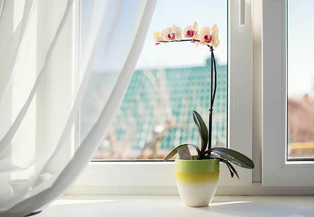 Flores con significado para decorar en ocasiones especiales - Orquídeas