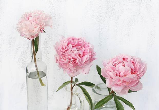 Flores con significado para decorar en ocasiones especiales - Peonía
