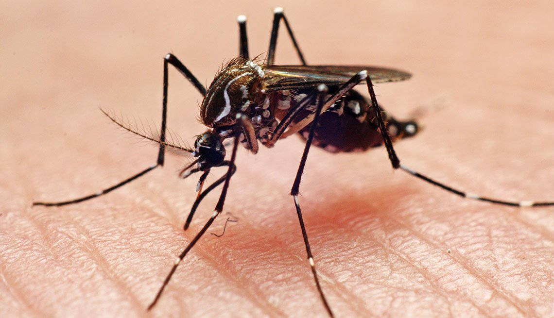 Tácticas para deshacerse de los insectos - Mosquito