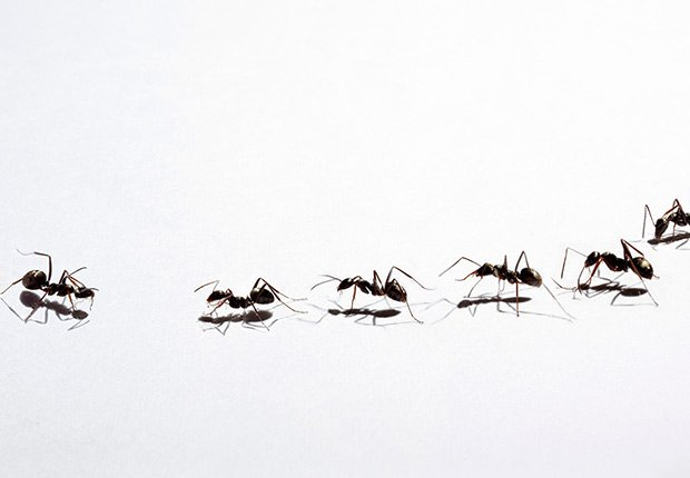 Tácticas para deshacerse de los insectos - Hormigas