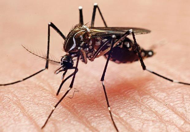 Tácticas para deshacerse de los insectos - Mosquitos