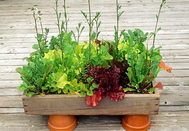 Maceteros para cultivar tus hierbas favoritas