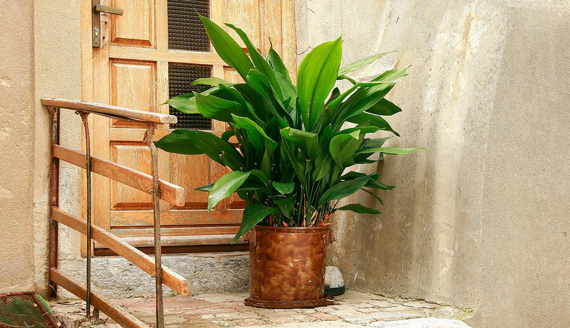 10 Best Indoor Plants that Require Low Maintenance  Leaf Cr House Plant on 5 leaf house plant, 3 leaf plant identification, 8 leaf house plant, 3 leaf outdoor plant,