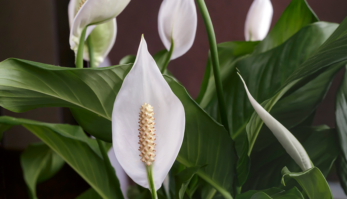 10 Houseplants That Are Hard To Kill