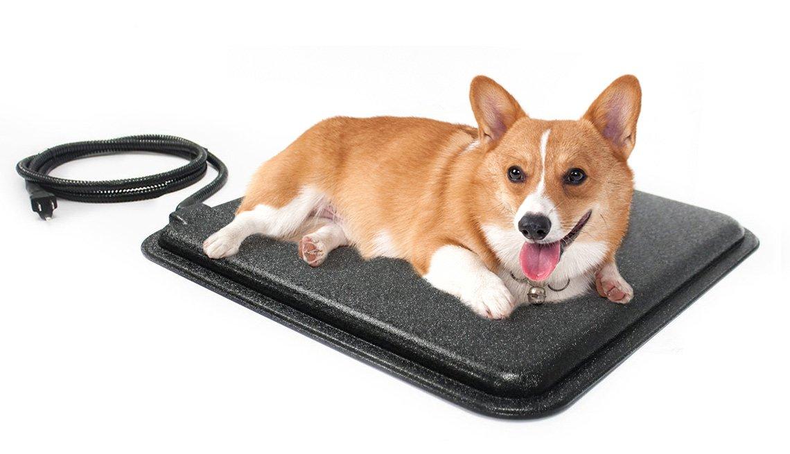 dog on heated pet pad