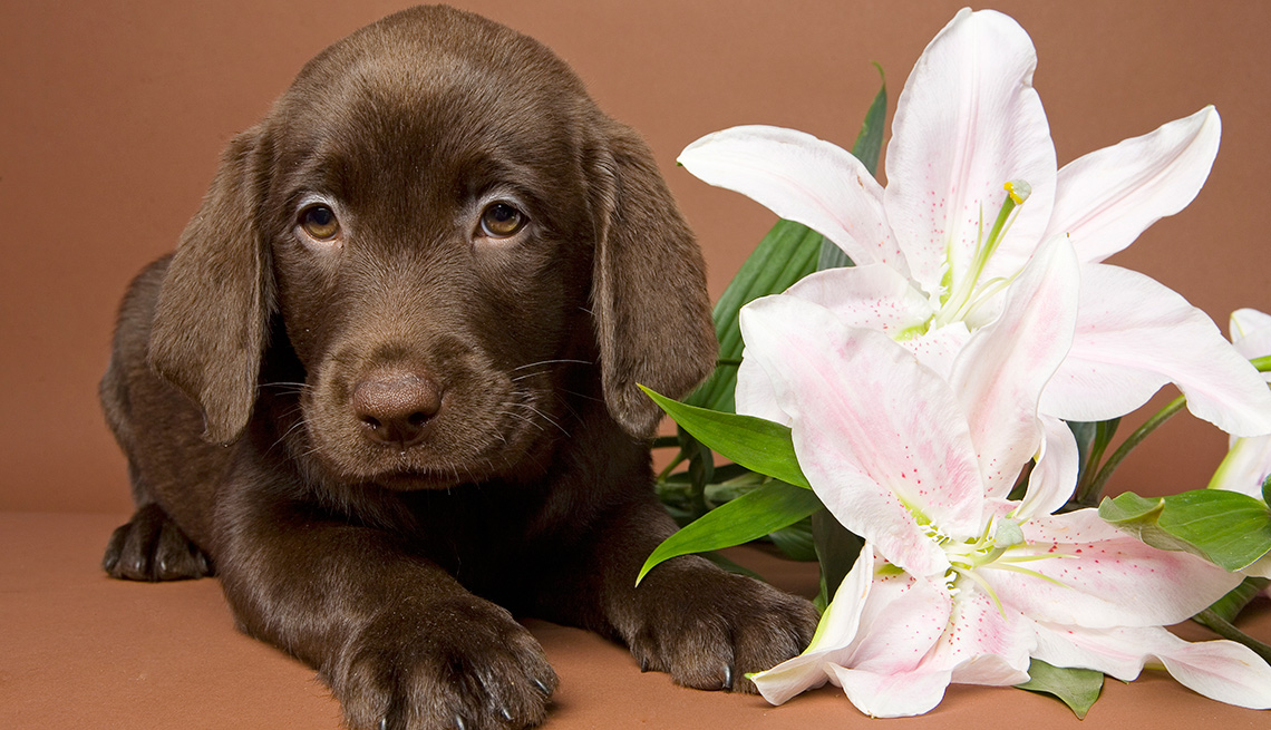 puppy and a lily