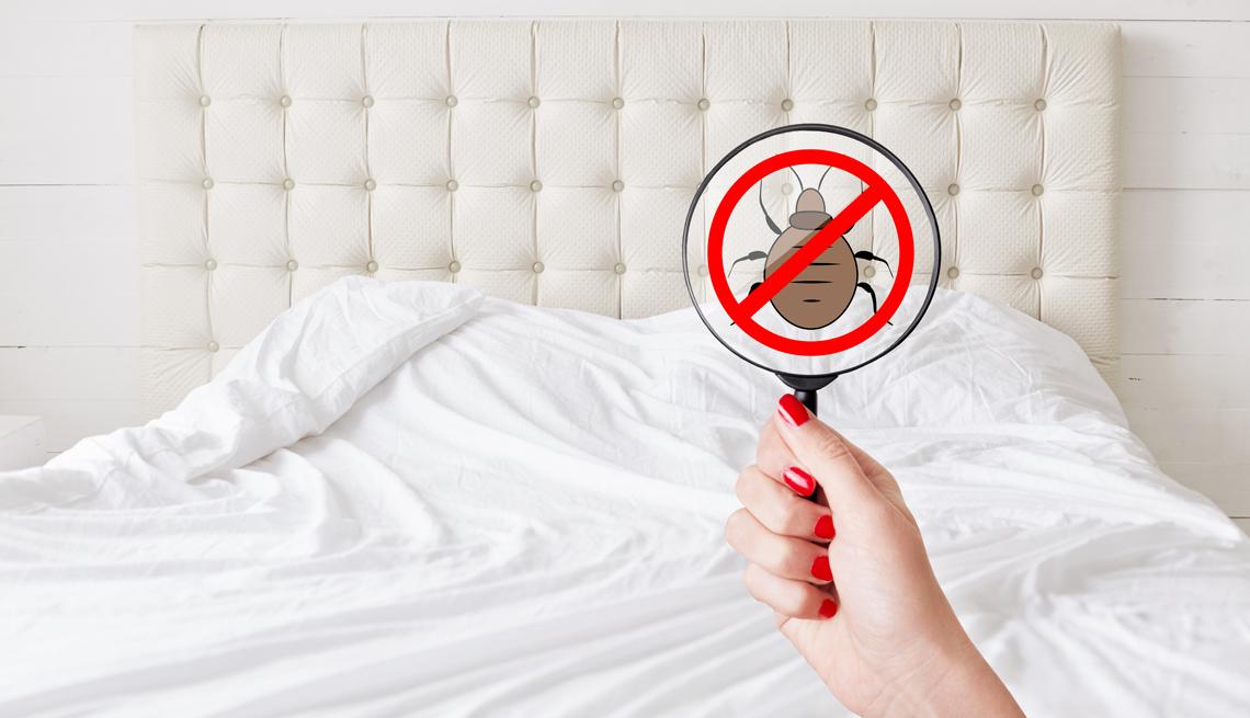 Persona con una lupa observa un chinche de cama