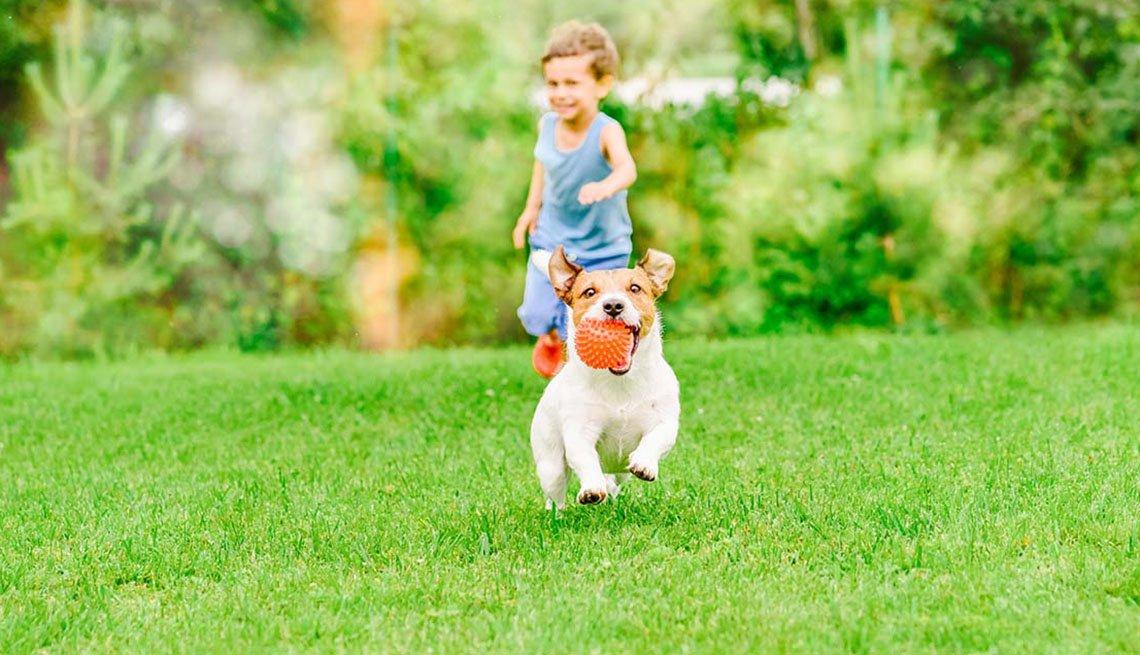 Niño en el jardín juega con un perro