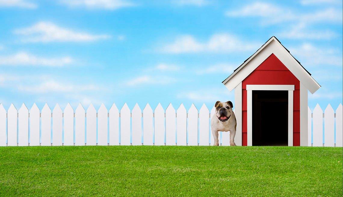 Imagen de un perro junto a su casa en el jardín