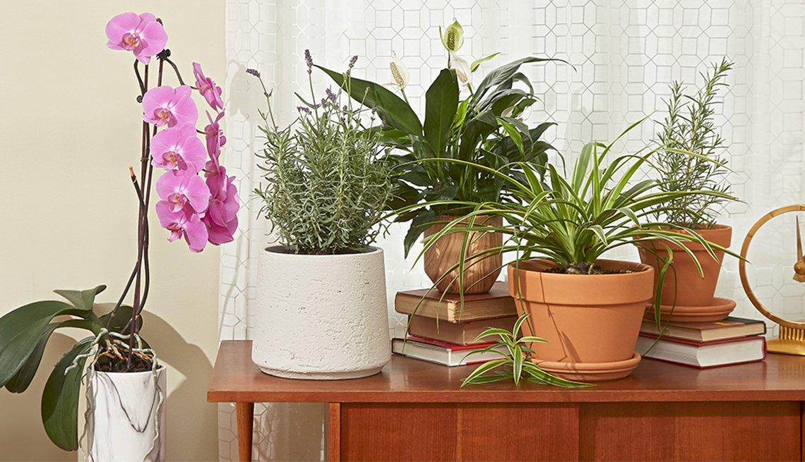 Varias plantas de interior sobre una mesa