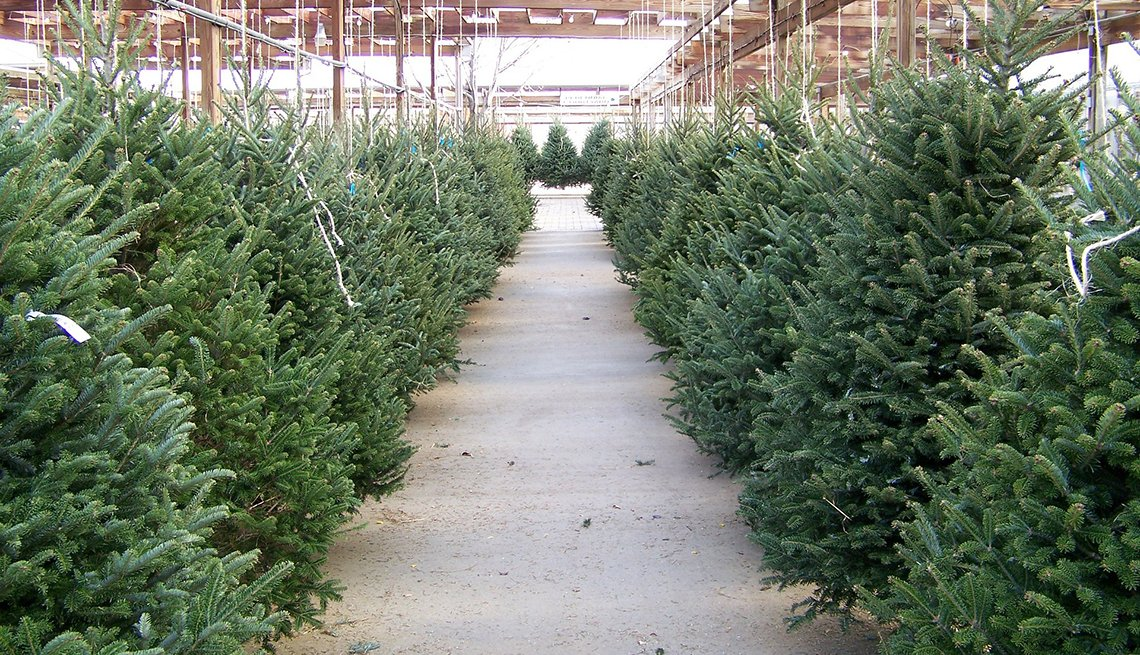 Christmas trees in a lot