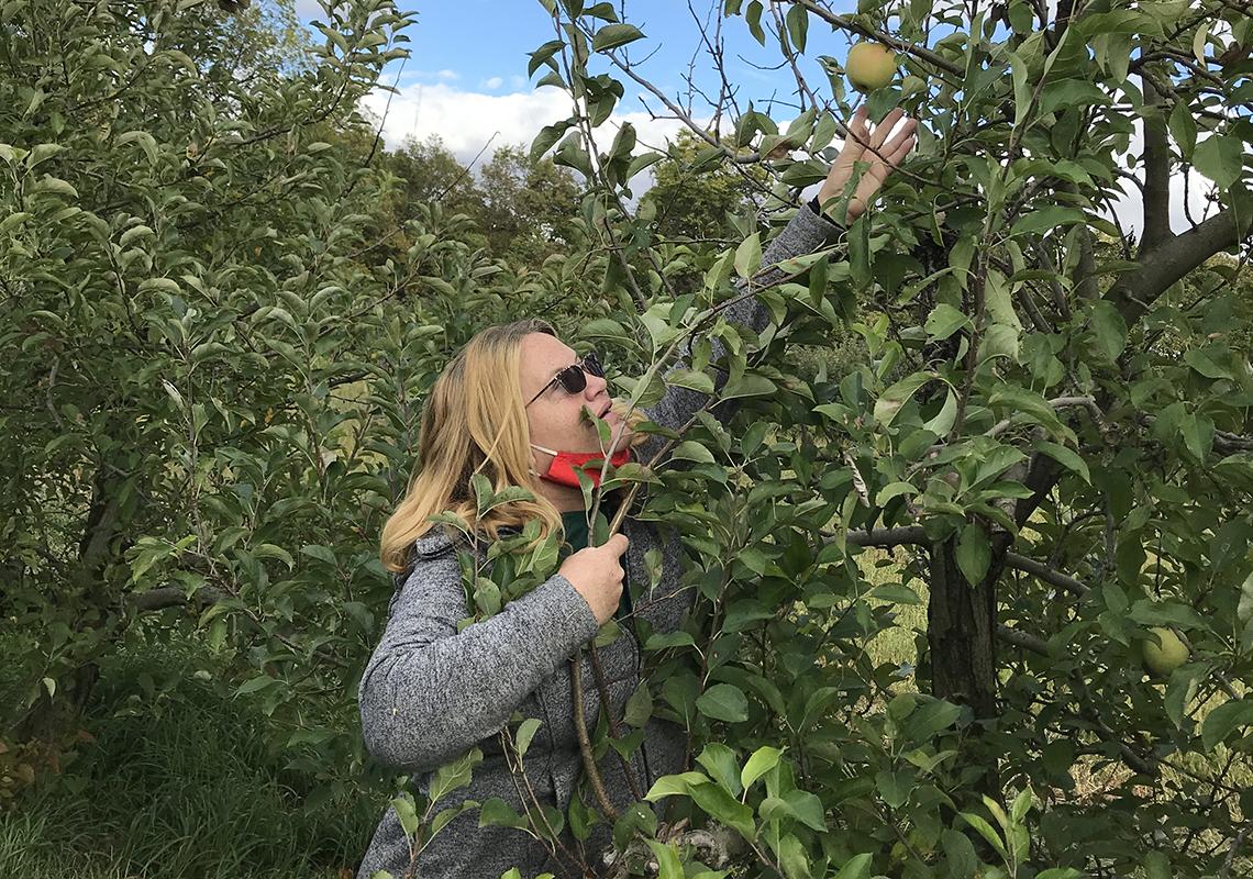 Mujer arrancando una manzana de un árbol