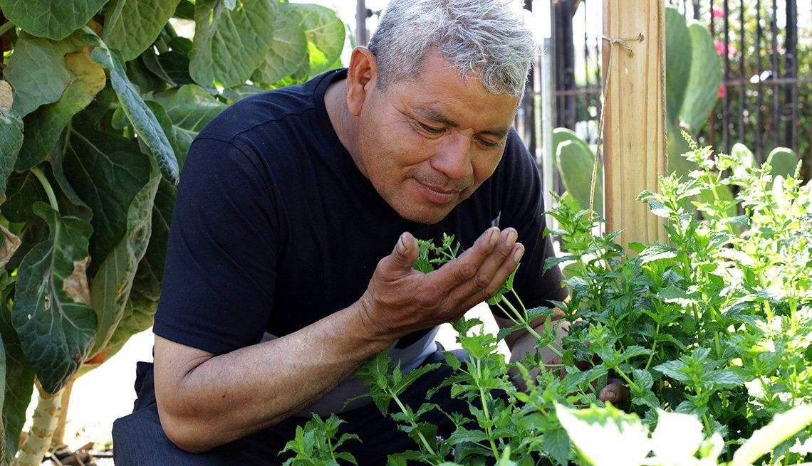 Un hombre huele una planta de menta