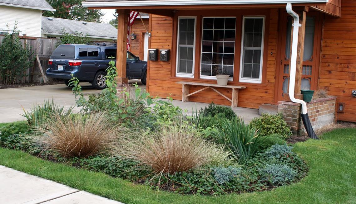 A rain garden in a front yard