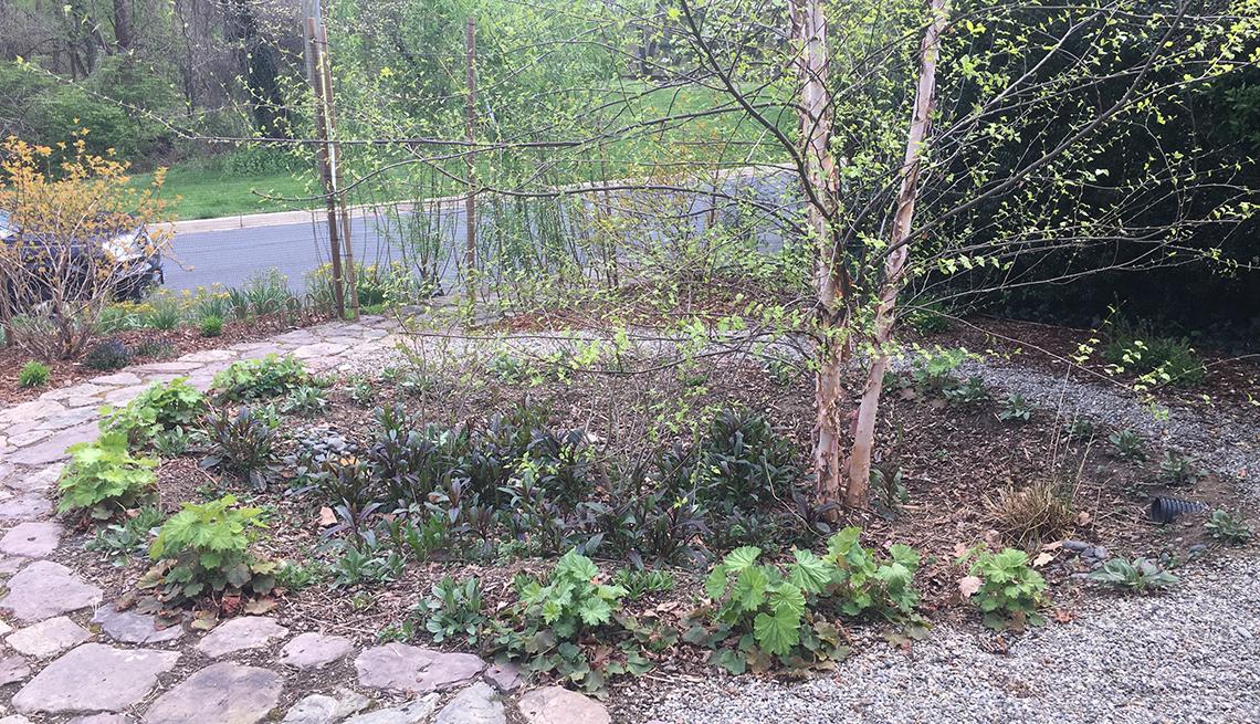 A rain garden in a yard