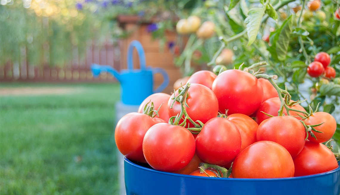 Recipiente con tomates rojos maduros