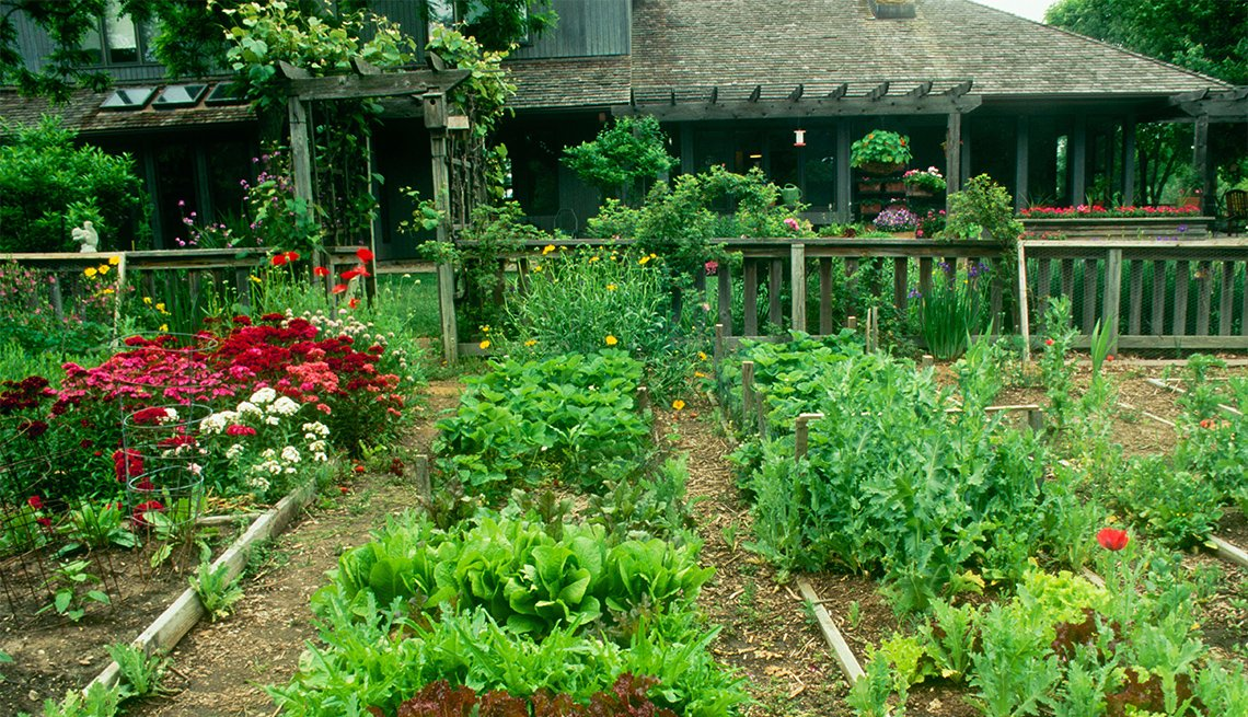backyard with fenced in vegetable and flower garden planted in raised beds