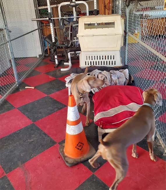 Perros en el garaje de una casa