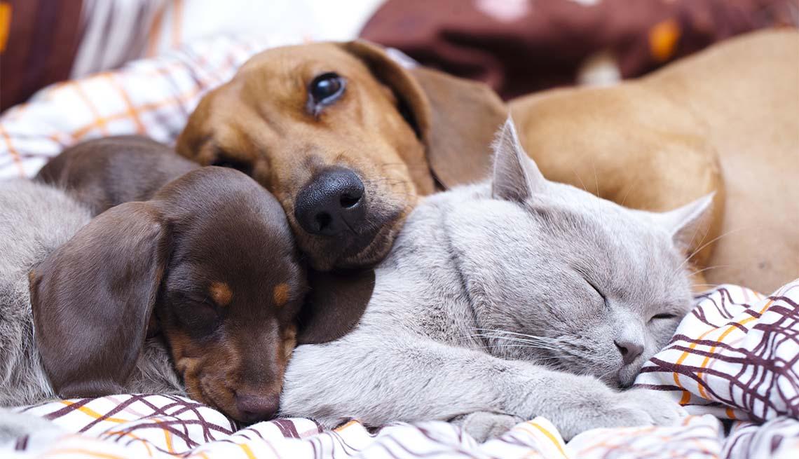 Un gato y dos perros duermen sobre una cama