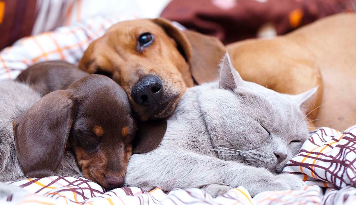 a cat and dogs sleep on the bed