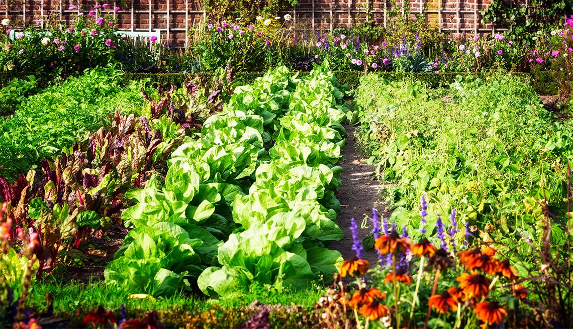 Huerta con diferente tipo de vegetales