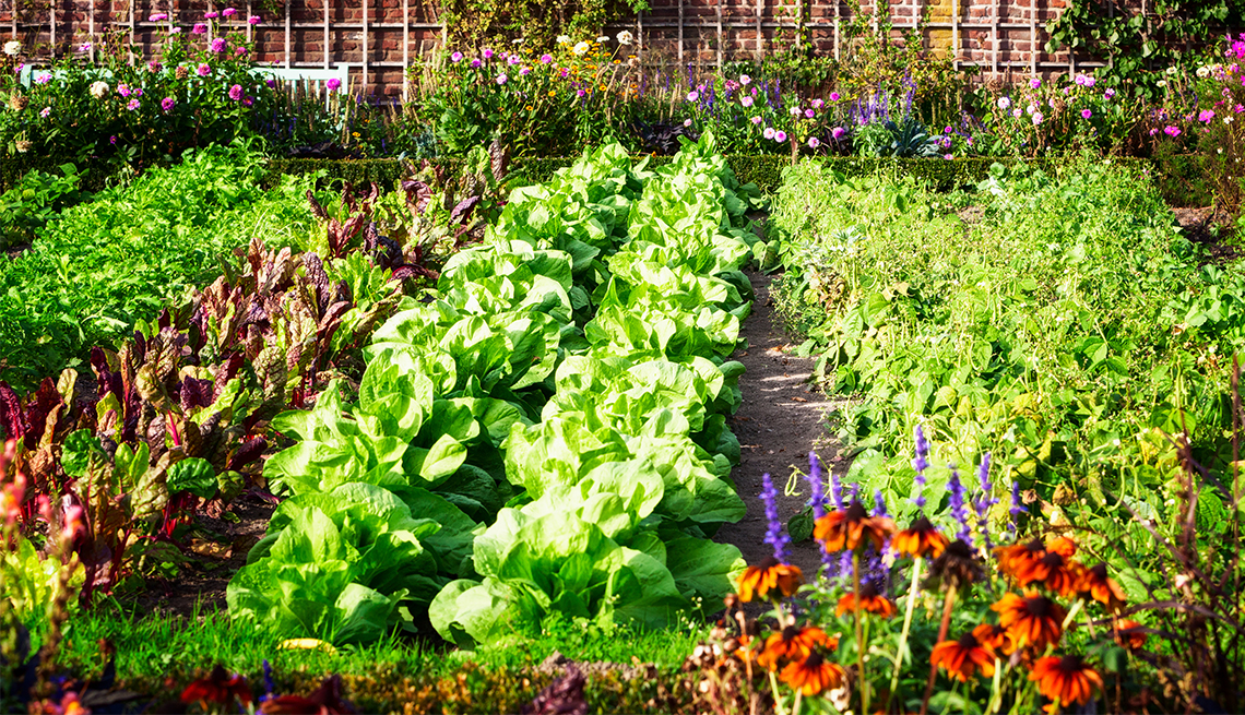 Vegetable garden in late summer