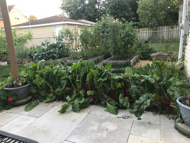 Eve Greenfield's victory garden