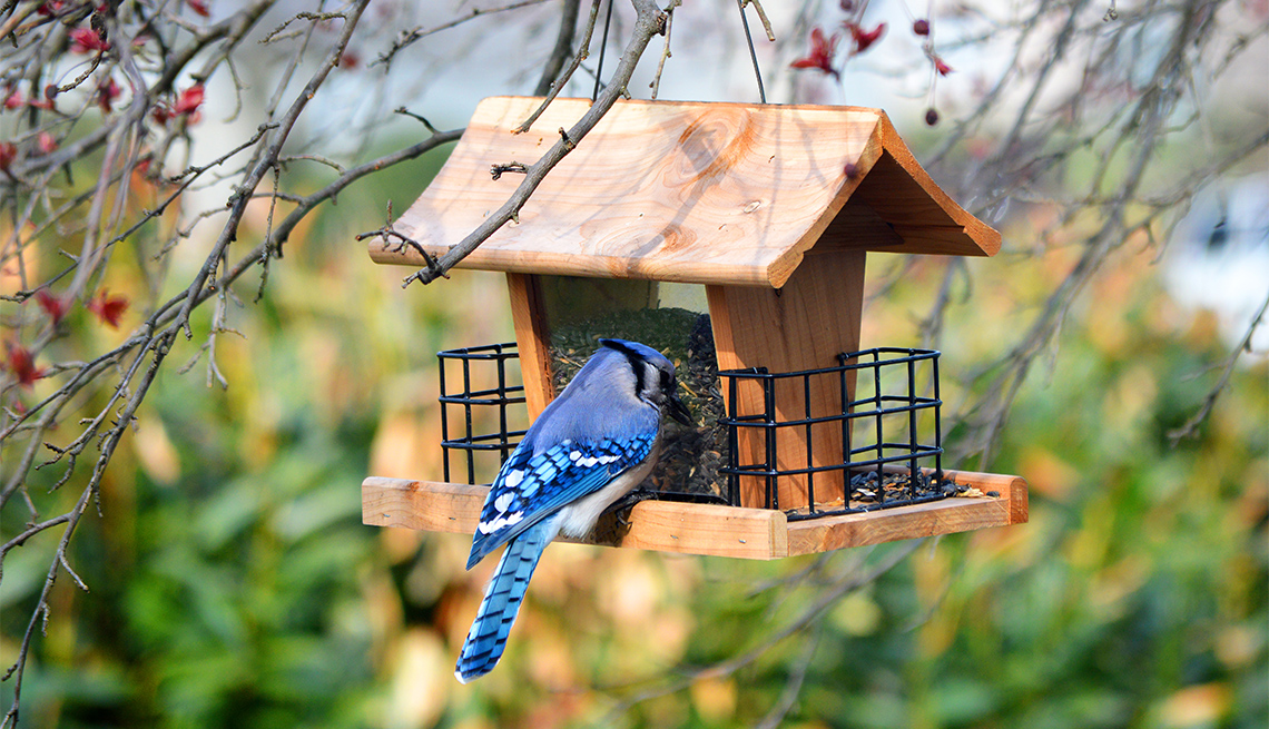 Un pájaro azul se alimenta en una casita colgada de un árbol