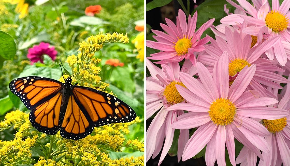 Mariposa se posa sobre unas plantas a la izquierda y unas flores con pétalos largos a la derecha