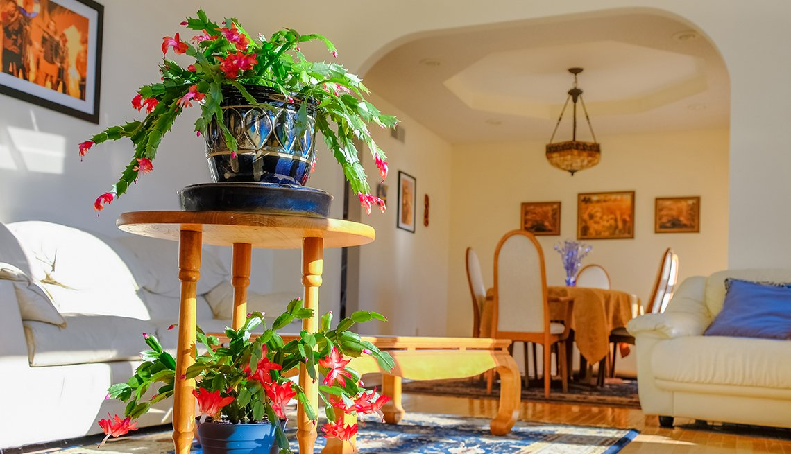 View of sunlit living room in Midwestern house with blooming house plants and photos on the wall; dining room in