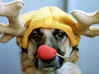 Reindeer dog - the holidays can be hazardous to your pets