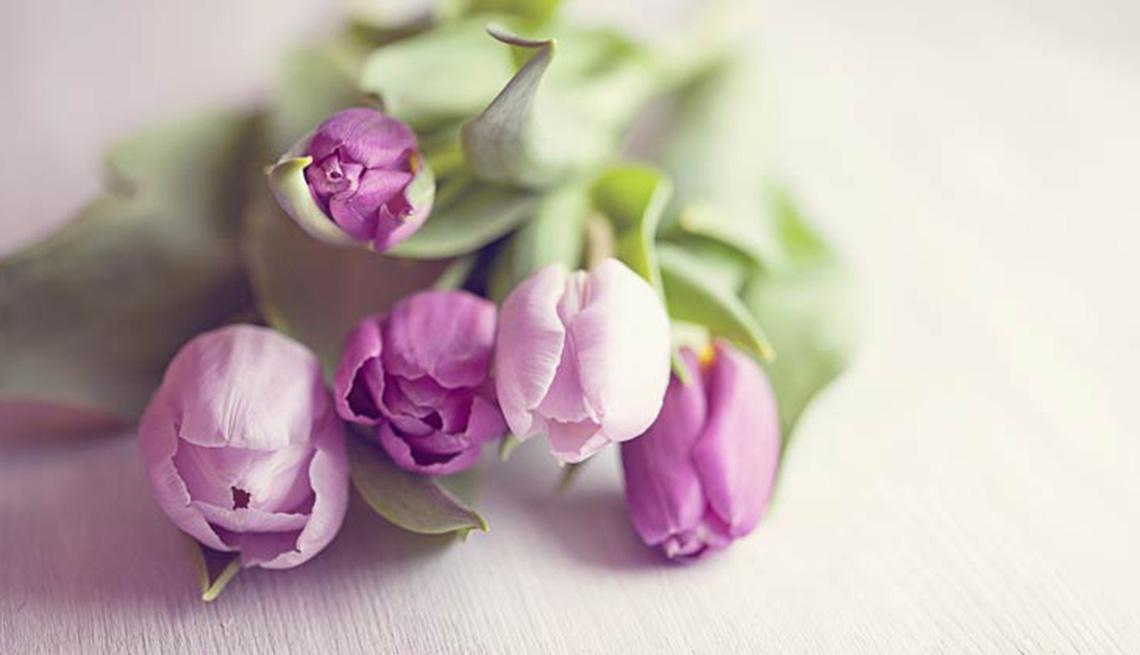 Ramo de tulipanes morados