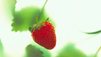 Cultive su propias fresas