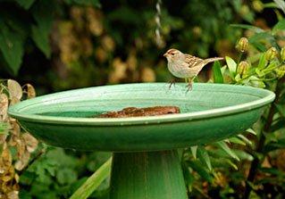 Hogar de Aves